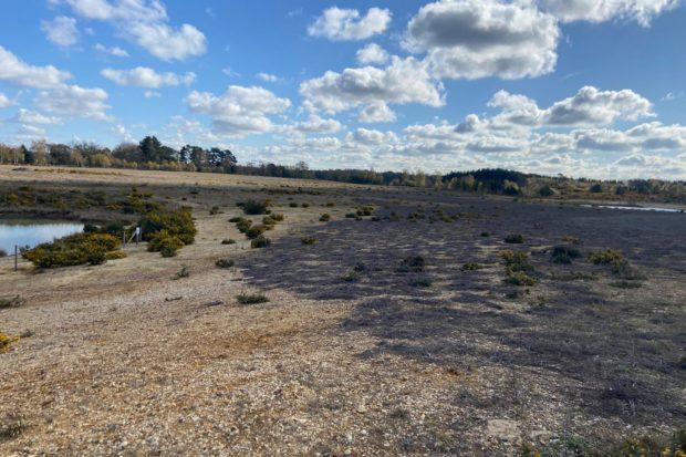 Photograph of Eversley Quarry showing open, stony habitat