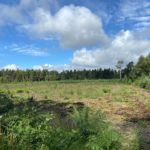 Photograph of recently cleared block of forestry