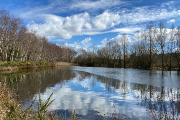 Photograph of pretty pond at Bramshill
