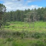 Photograph of a forestry valley