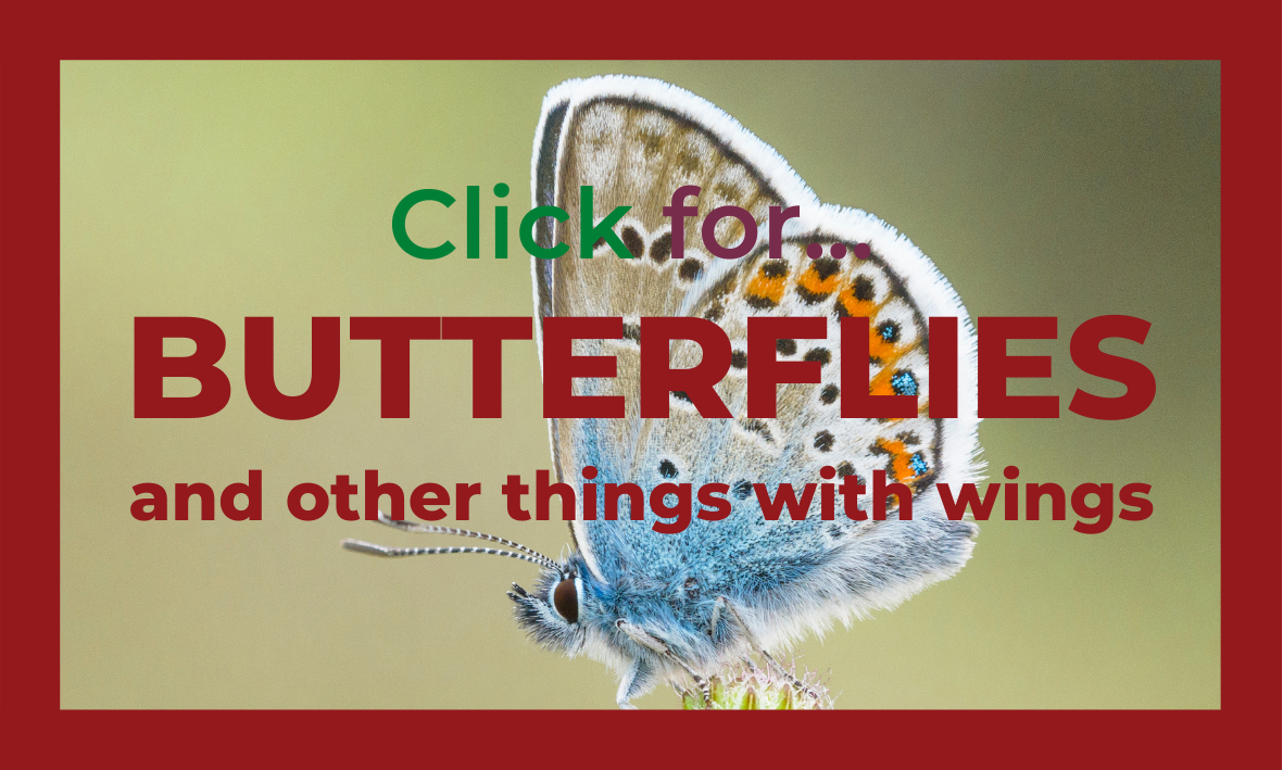 Click here for invertebrate fact files
