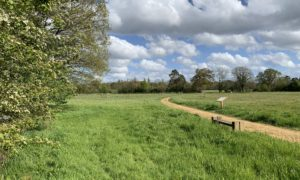 Photograph of a meadow with bench and noticeboard