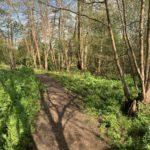 Photograph of woodland