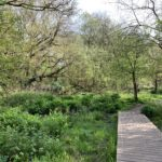 Photograph of woodland and a boardwalk