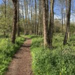 Woodland in May