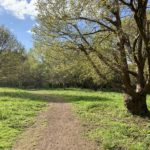 Path through a small meadow