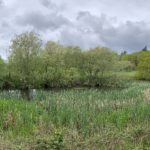 Another pretty pond, filled with reeds and surrounded by trees