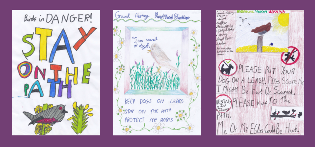A selection of school children's posters helping to protect ground-nesting birds