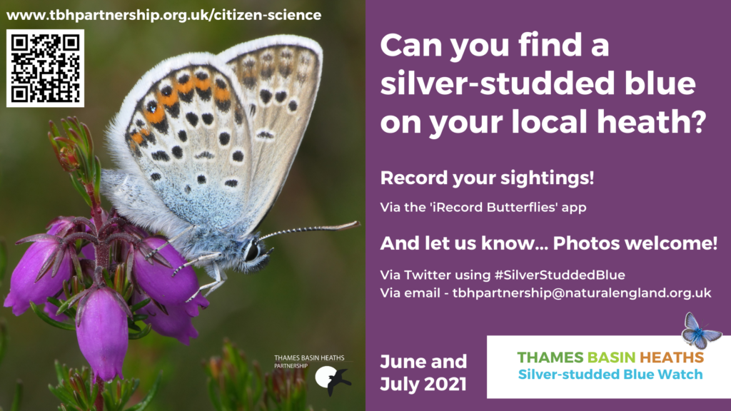 """Graphic asking """"Can you find a silver-studded blue butterfly on your local heath?"""""""
