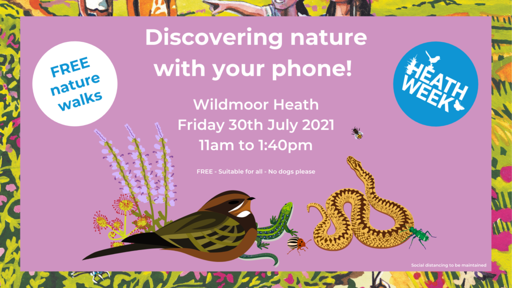 Heath Week event poster showing a nightjar, reptiles and other wildlife