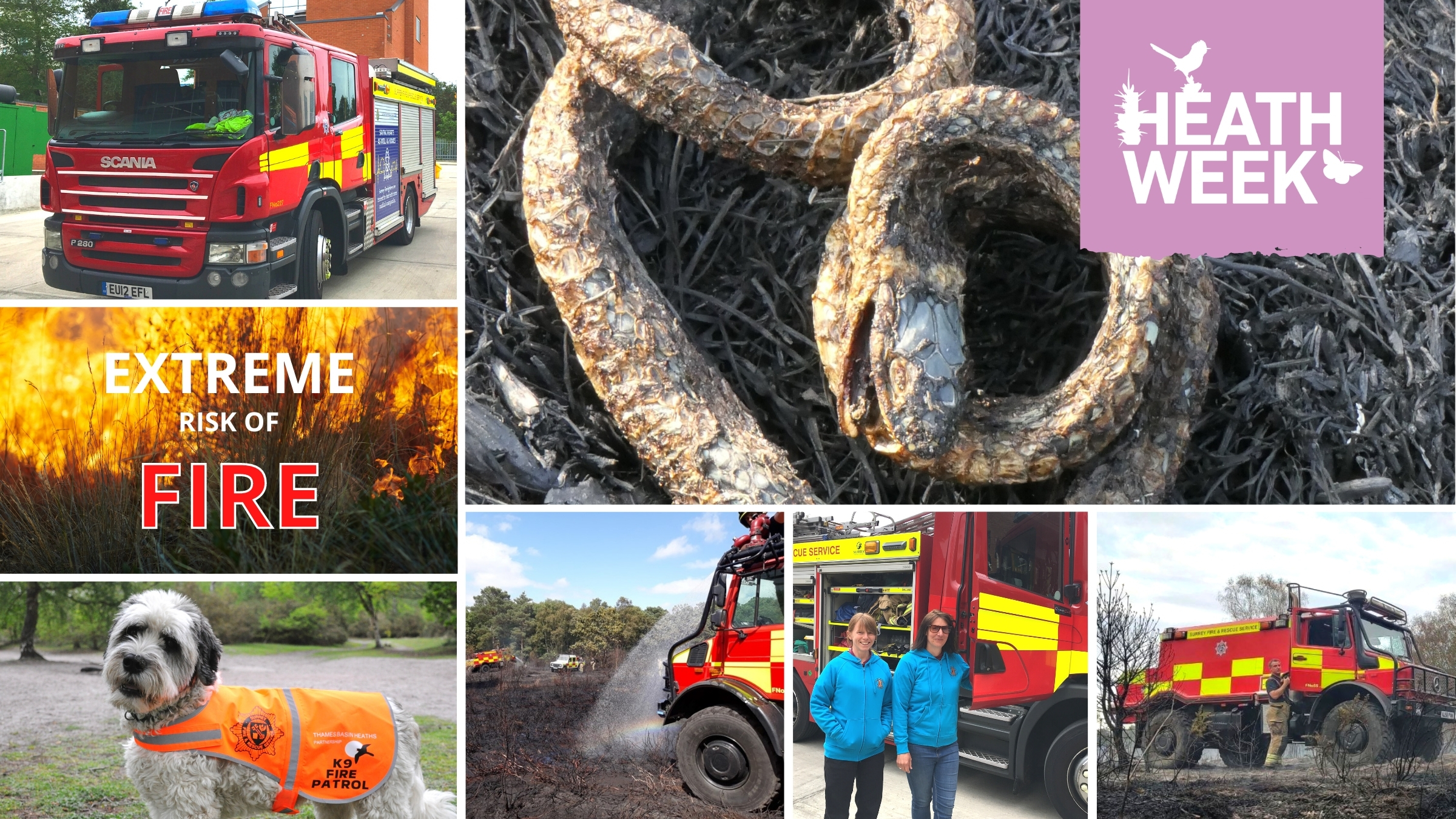 Heath Week montage showing fire engines and some of the consequences of fire - burnt reptile and burnt heath