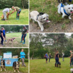 Montage of some of the Heathland Hounds enjoying some advice from Natalie.