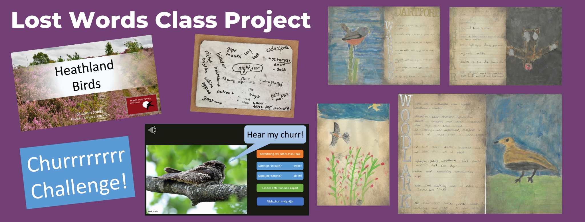 A selection of illustrated spells created by a year 3 class to protect our ground-nesting birds