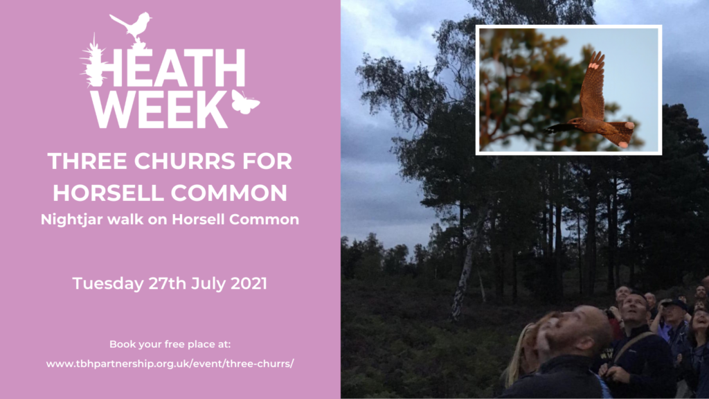 Heath Week event poster showing people looking up at a nightjar