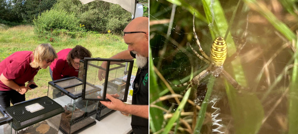 Photograph of Ruth and Warden Val peering into the taks brought along by HIWARG (left) and the wasp spider (right)