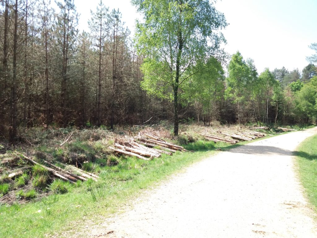 Felling of trees along a track