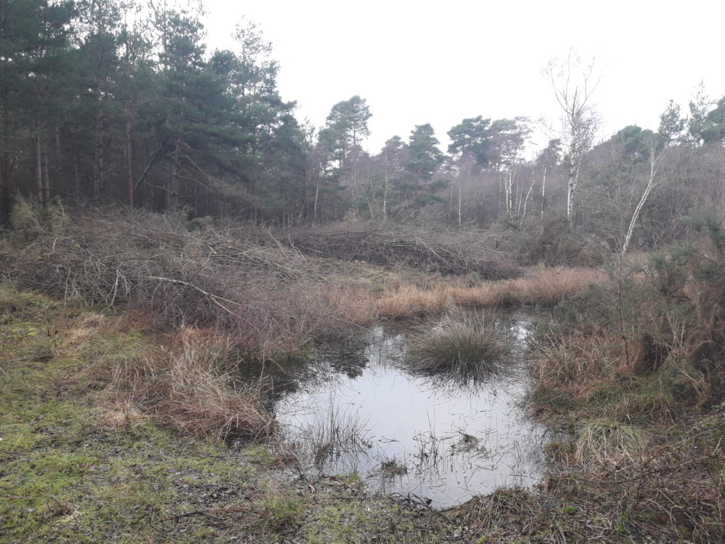clearing of trees around a wetland area